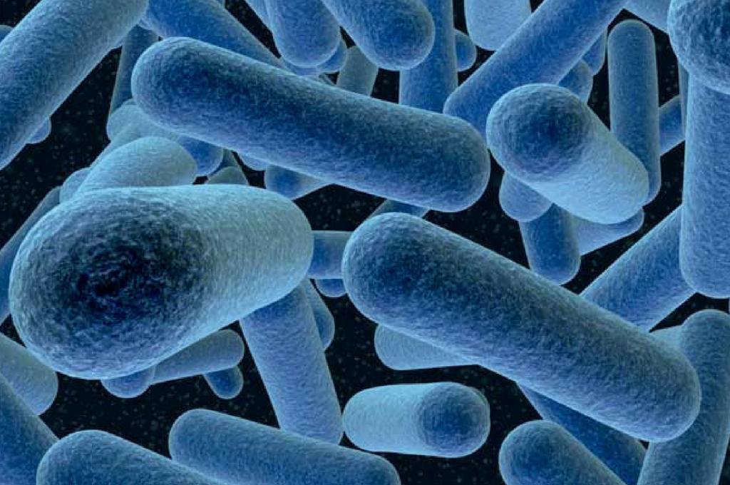 Lactobacillus Bulgaricus - Phytocode